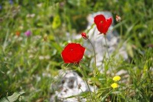 Lovely spring field flowers