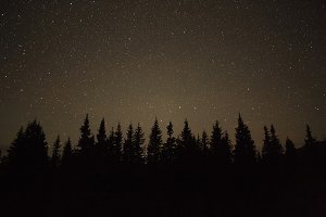 View on the pine trees with stars