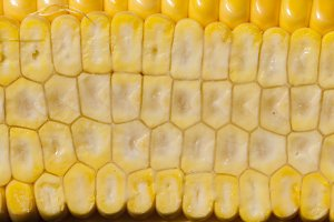 grain structure corncob