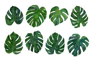 Watercolor Monstera