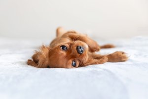 Cute puppy relaxing