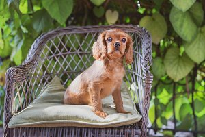 Cute puppy sitting on the chair