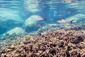 Underwater photos of Blacktip Reef S