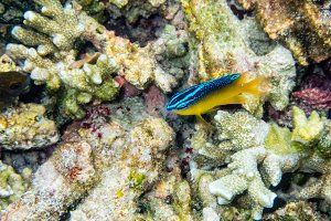 Underwater photos of small sea fish
