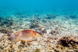 Underwater photos of sea fish