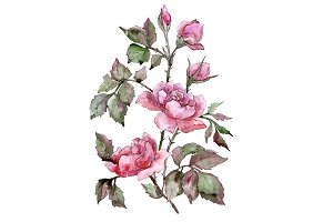 Elegant bouquet of pink rose PNG set