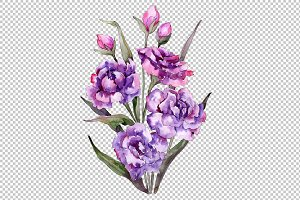 Bouquet of purple peony PNG set