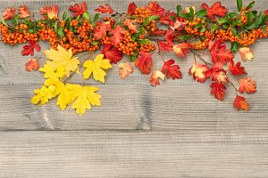 Autumn background Red yellow leaves