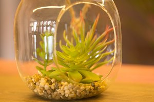 plants in a glass vase