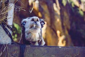 Animal Eye´s