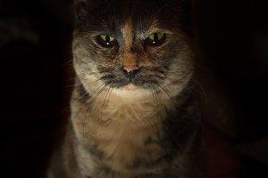 Power Kitty Photo