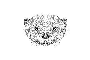 Asian Small Clawed Otter Black and W