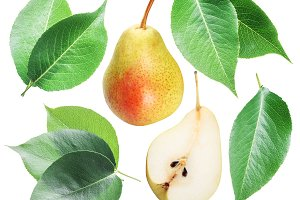 Green pear leaves and pear fruit on