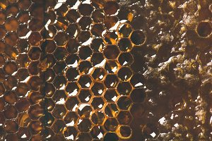 Bee honeycomb texture, wallpaper or