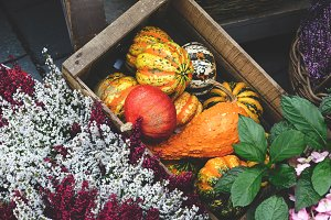 Different kinds of pumpkins inside a