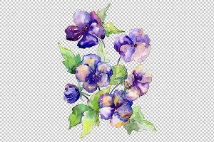 Watercolor bouquet of purple viola
