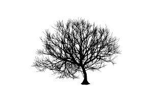 Black dry tree winter or autumn