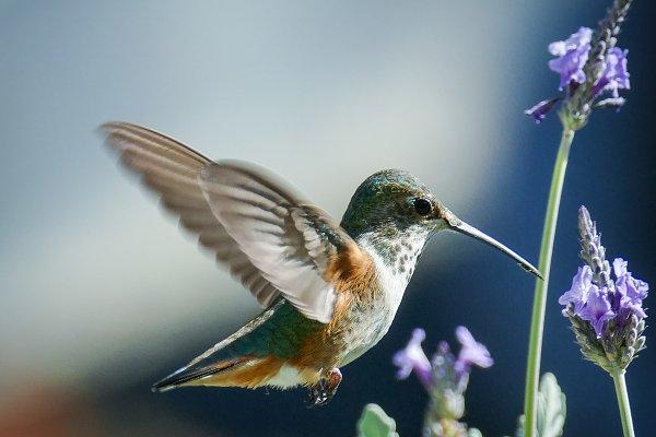 Animal Stock Photos: Sunshine Inspired Designs - Hummingbird #11