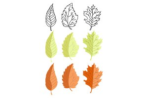 Leaves illustrations