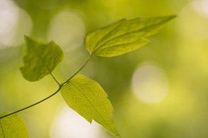 Fresh green leafes