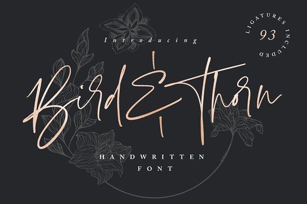 Bird & Thorn