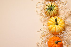 Different Colorful Pumpkins, Autumn