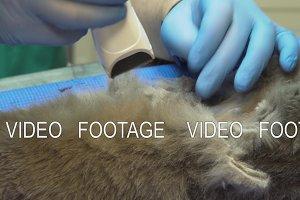 Ultrasound diagnostic in veterinary