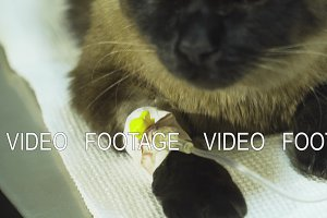 Cat with a catheter in a vet at the