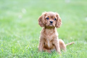 Puppy on the green grass