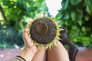 Female hand holding sunflower