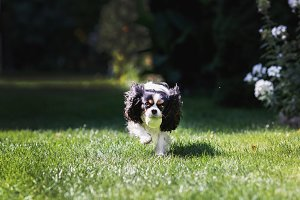 Cute dog fetching a ball