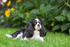 Cute dog lying on the grass