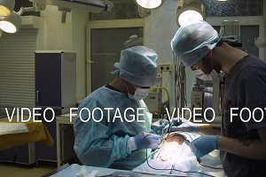 Surgical operation of a dog in a