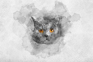 Cute British shorthair cat's waterco