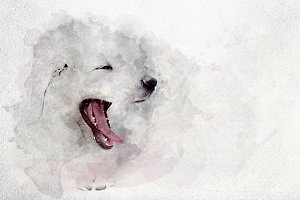Watercolor image of white puppy dog