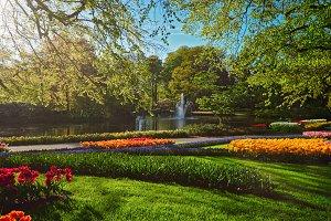 Keukenhof flower garden. Lisse, the
