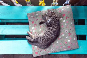 Kitten sleeping on the pillow