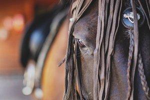 Head of beautiful horse