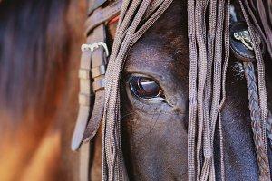 Closeup of horse head