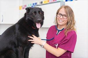 Female veterinary using stethoscope