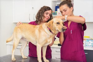 Hearing checkup of a dog