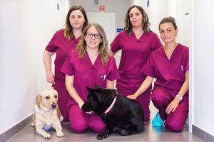 Cheerful woman veterinary team