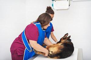 Veterinary radiologist examining dog