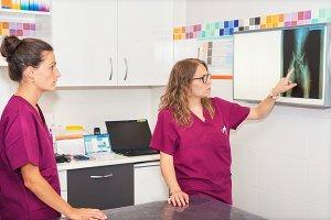 Veterinarian team examining x-rays