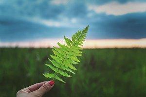 Fern leaf in hand