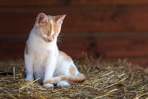 Cute kitten portrait