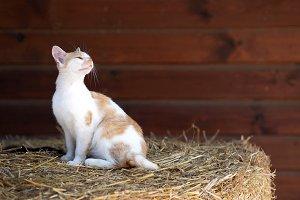 Cute kitten on the hay bale