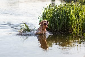 Happy dog jumping in the water