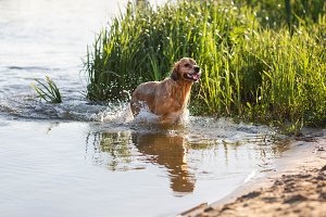 Happy dog playing in the water