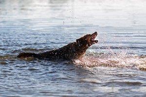 Dog having fun in the water